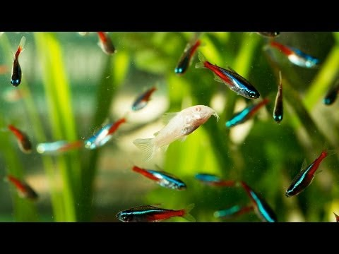 How to Fix Cloudy Fish Tank Water | Aquarium Care