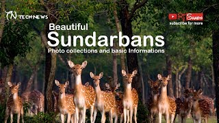The Sundarbans - World
