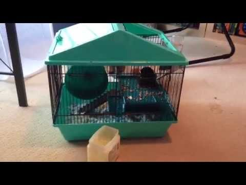 How To Quiet Down A Squeaky Hamster Gerbil Or Mouse Running Wheel