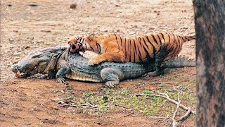 12 Greatest Fights in the Animal Kingdom