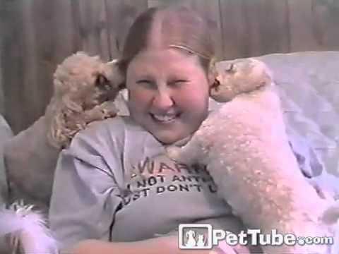 Q-Tip Poodles- PetTube