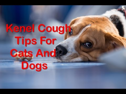 15 Useful Home Remedies for Kennel Cough in Dogs and Cats