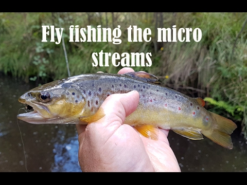 fly fishing for trout in a micro stream