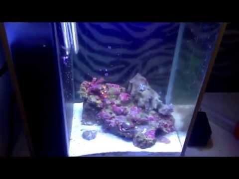 Fluval spec reef, now with coralife t5 mini aqualight