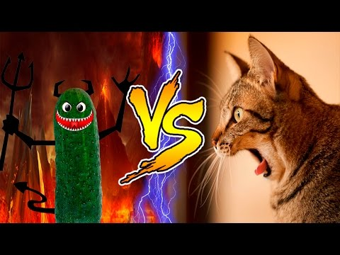 Cats scared of Cucumbers Compilation - Part 2 - Cats Vs Cucumbers - Funny Cats 2016