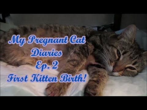 My Pregnant Cat Diaries: Ep. 2 First Kitten Birth!
