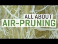 All About Air Pruning