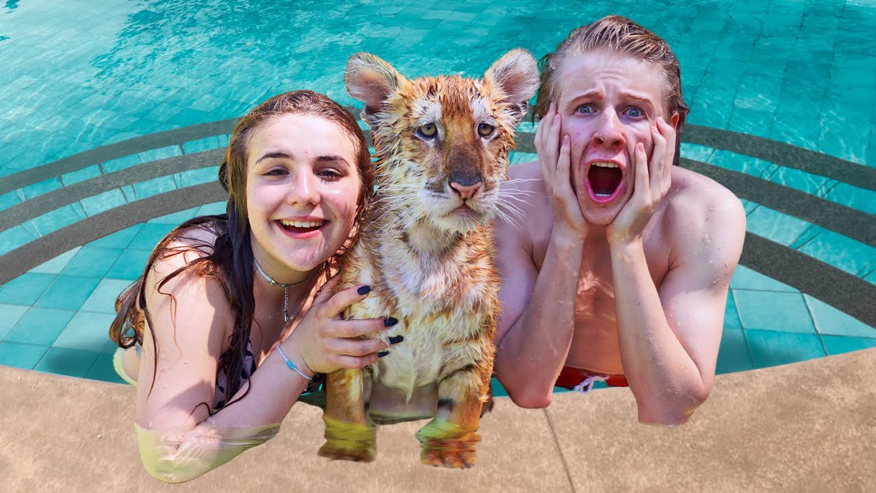 TEACHING BABY TIGERS TO SWIM **cute reaction**💦🐯| Piper Rockelle