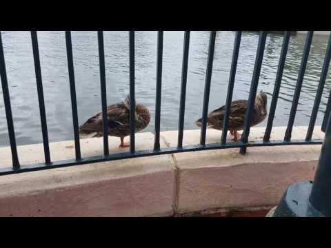 Hanging out with the ducks in Epcot