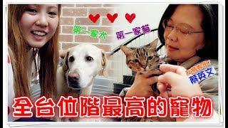【魚乾】全台位階最高的寵物!拜訪第一家貓家犬!(Feat. 蔡英文 的寵物們)