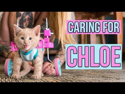 Caring for a Paralyzed Kitten, Chloe (UPDATE!)