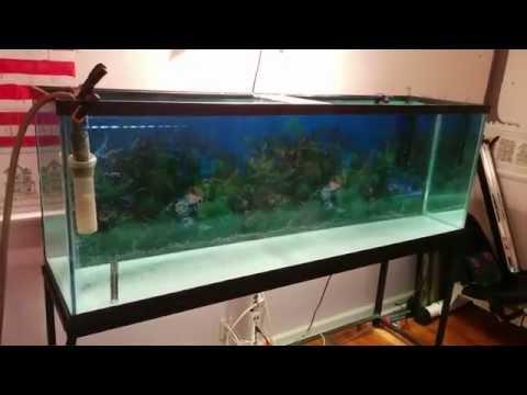 2015 January 2-15 - My tank re-sealing story