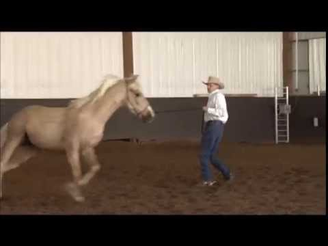 Handling the Emotional Horse - on the Ground