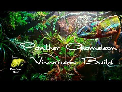 Bert The Panther Chameleon Planted Vivarium Build