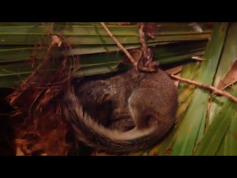 Baby squirrels fell out of a tree and saved from dying!