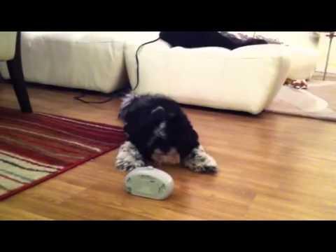 Lola vs The Anti-Barking Machine