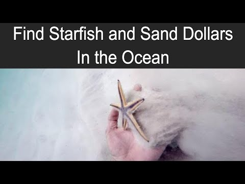 How to Find Sea Stars (Starfish) and Sand Dollars