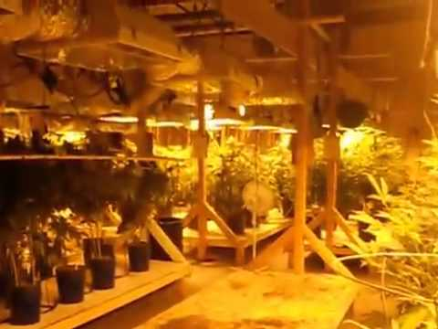 Indoor Grow 05