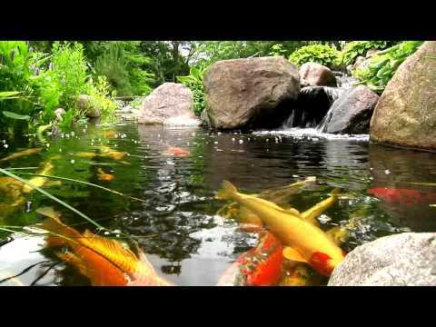 York, Lancaster, Harrisburg PA Backyard Koi Fish Ponds, Waterfalls, and Fountains