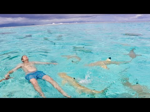 SWIMMING IN SHARK INFESTED WATER!!