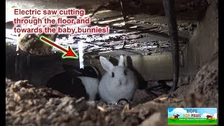 We had to use an electric SAW to save this family of homeless bunnies!!! DANGEROUS RESCUE!!!
