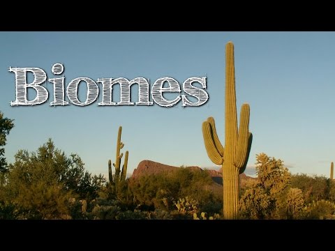 Biomes of the World for Children: Oceans, Mountains, Grassland, Rainforest, Desert - FreeSchool