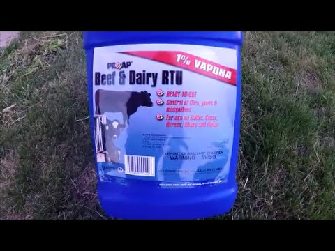 How to Treat Calves, Cows,  Cattle, Livestock for Flies,  Mosquitoes, and other  Nuisances.
