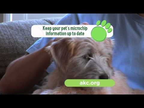 Keep Your Dog Safe and Check His Microchip