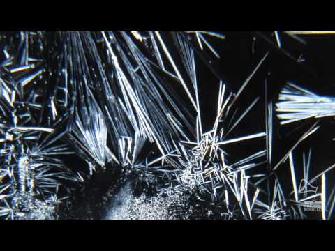 EXPERIMENT - Salt Crystals Growing - Time Lapse (Micro Macro)