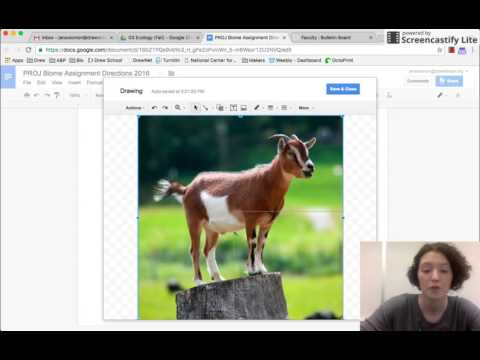Inserting a Drawing into a Google Document