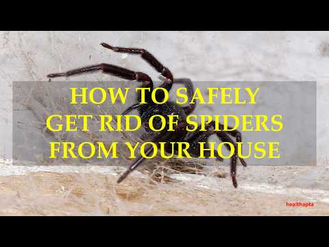 HOW TO SAFELY GET RID OF SPIDERS FROM YOUR HOUSE