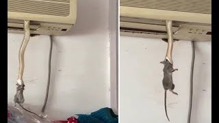 OMG! A SNAKE CAME OUT FROM THE AC TO EAT RAT - HOW ABOUT YOUR AC!