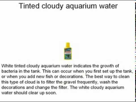 Clearing Up Cloudy Aquarium Water