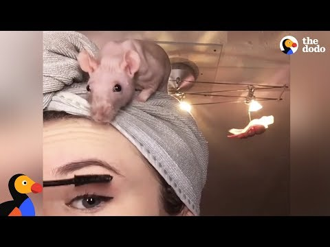 Rat Family Is Perfect: Girl Loves Her 5 Rats   The Dodo