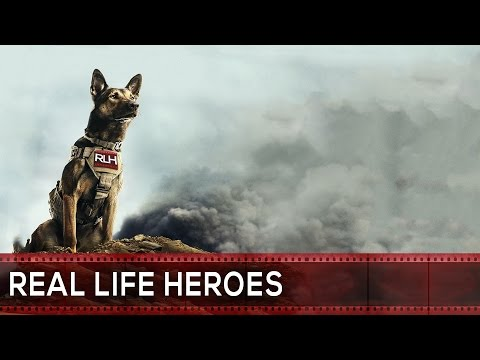 Top 10 Heroic Dogs Who SAVED PEOPLE'S LIVES!
