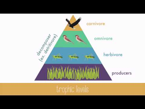 Energy Transfer in Trophic Levels