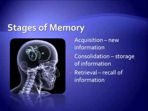 Improve Memory Tips | Ways to Get a Better Memory | Increase Memory Power