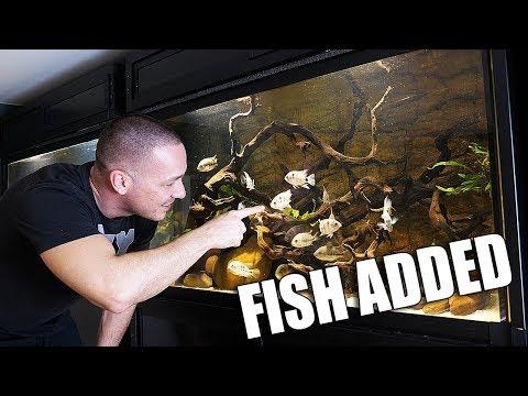 The central american aquarium