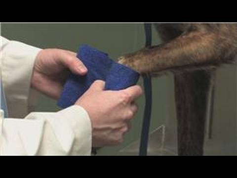Dog Health : How to Know if a Dog Broke Its Paw