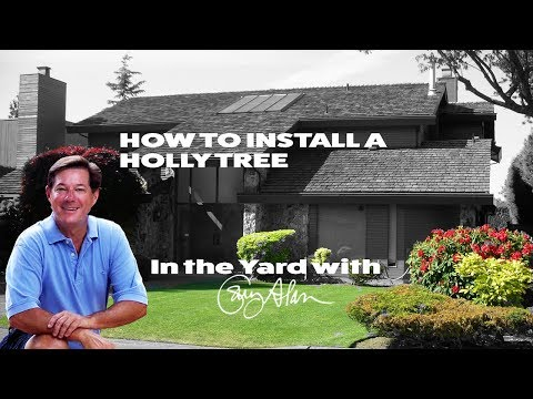 How to install a Holly Tree - In the Yard with Gary Alan
