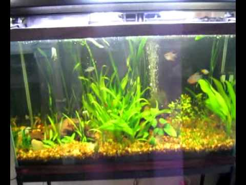 Filtration, Water Flow, and Gas Exchange in Aquariums