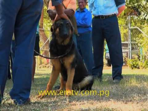 Puppies Donated to Port Moresby Police Dog Unit