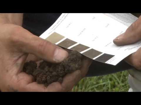 Soil Organic Matter Test