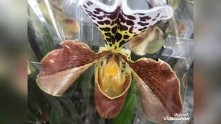 Красота Орхидей в фотографиях. Люблю фотографировать цветы!