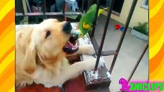 Parrot  Talking and Annoying Dogs