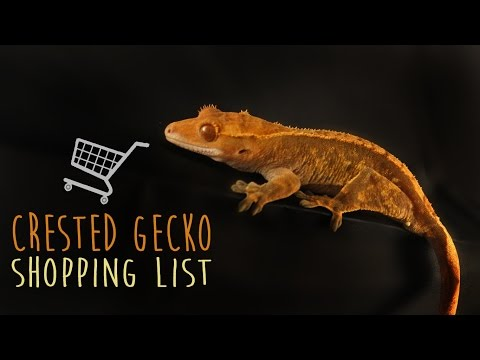 10 Things To Buy For Your Pet Crested Gecko!