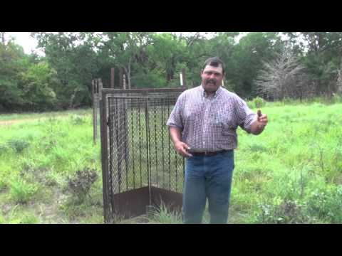 Trapping feral hogs: Gates and Baits