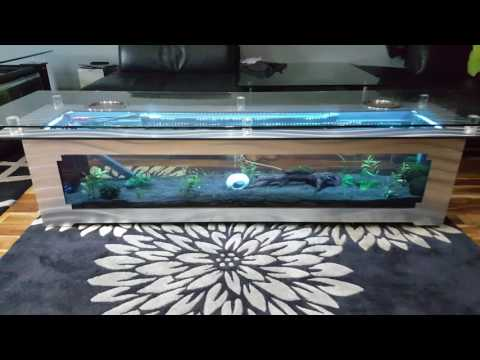 New coffee table fish tank