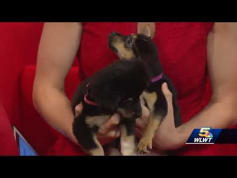 Meet the pint-sized pups and friendly cat up for adoption