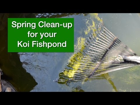 Spring Clean-Up for your Koi Fish Pond
